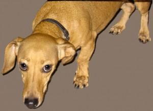 megrettent kutya
