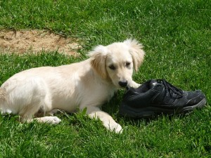 kiskutya cipővel