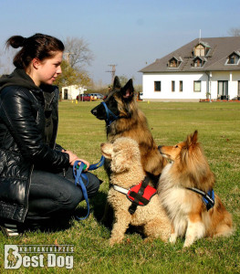 Kutyakiképzés egyedi igények szerint - Bestdog.hu