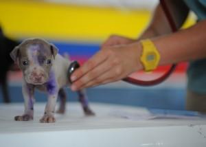 kölyökkutya állatorvosnál