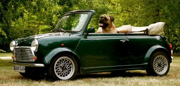 kutya autóban