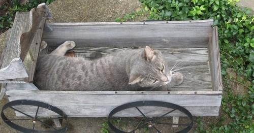 cica egy talicskában